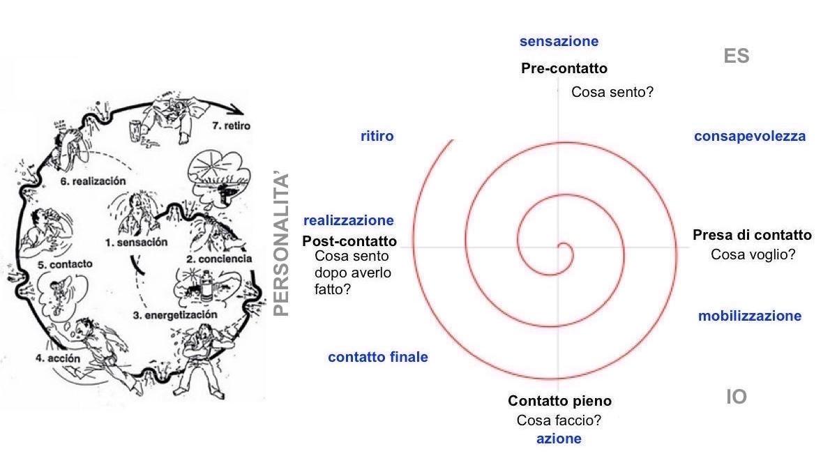 ciclo-dellesperienza